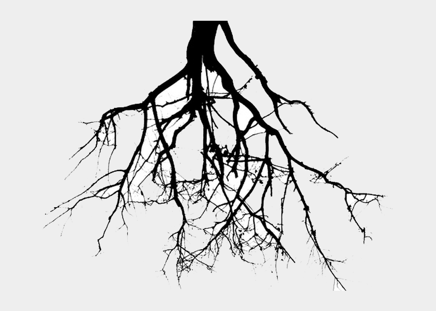 family tree with roots clipart, Cartoons - Roots Clipart Draw - Roots Clipart