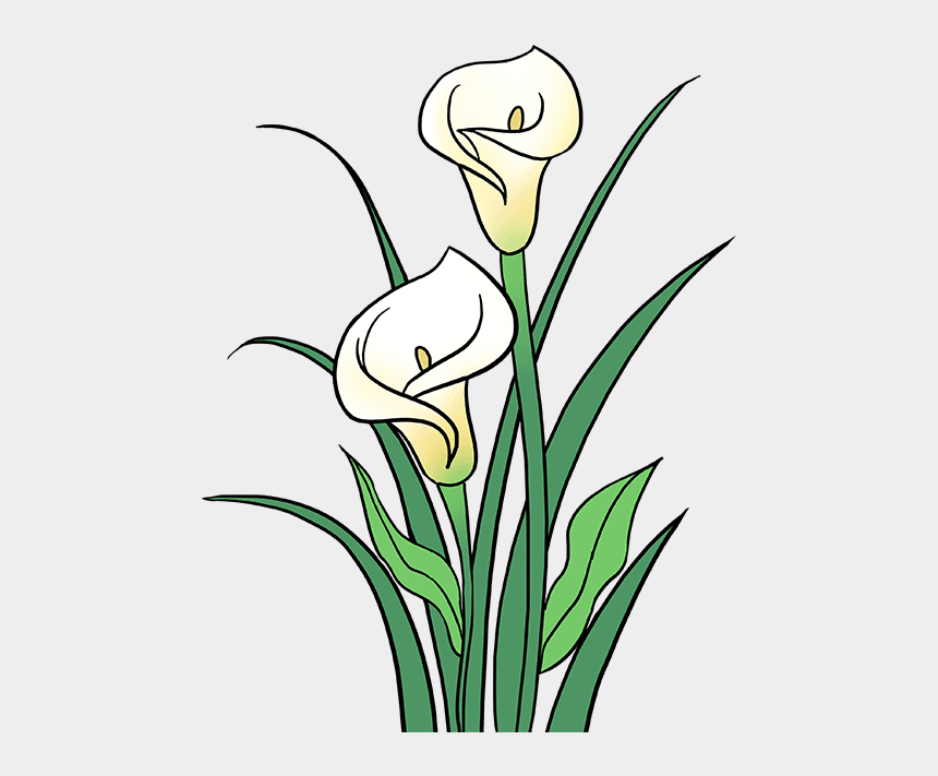 calla lily clipart, Cartoons - Stem Drawing Lily Flower - Calla Lily Flower Drawing
