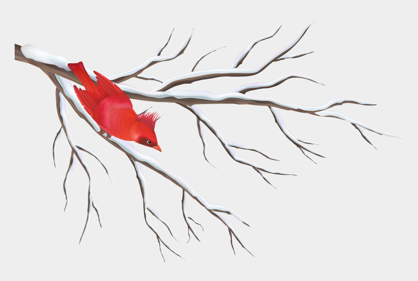 Christmas Cardinals Clipart.Winter Branch With Bird Png Clipart Image Winter Branch