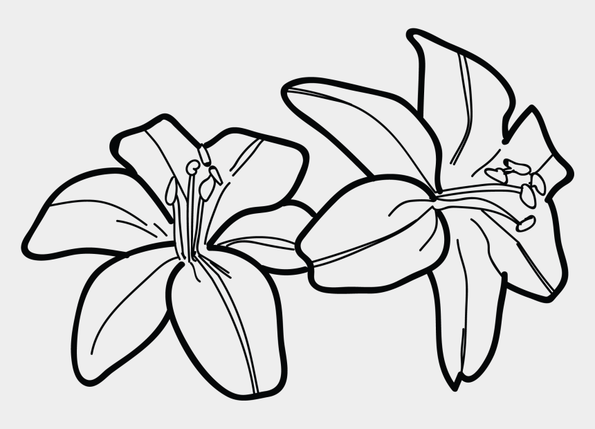 calla lily clipart, Cartoons - Lily Clipart Black And White - Tiger Lily Drawing