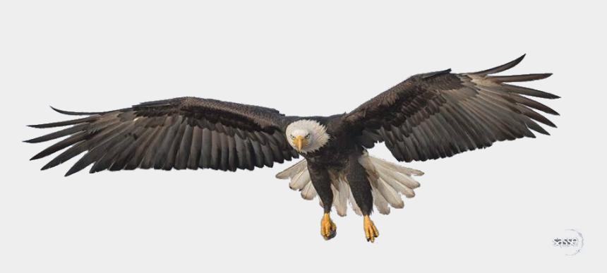 eagle clipart png, Cartoons - Flying Eagle Png Transparent Image - Flying Eagle Png