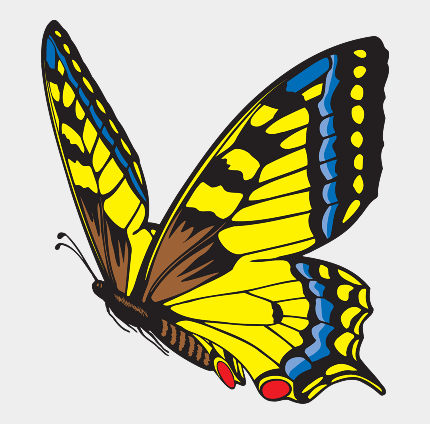 life science clipart, Cartoons - The Life Cycle Of The Butterfly - Life Cycle Of A Butterfly Butterfly