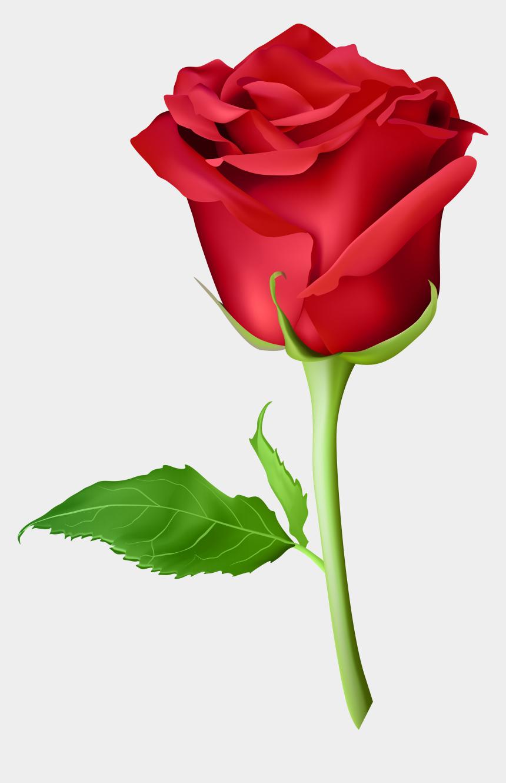 long stem rose clipart, Cartoons - Red Rose Png, Rose Flower Pictures, Rose Images, Pink - Gulab Ka Phool Png
