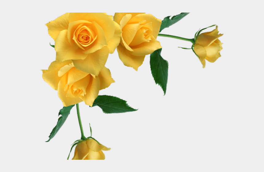 long stem rose clipart, Cartoons - Yellow Rose Clipart Stem Drawing - Yellow Roses Transparent Background