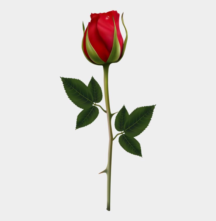 long stem rose clipart, Cartoons - Clipart Rose Rose Bud - Vectores Flor Rosa