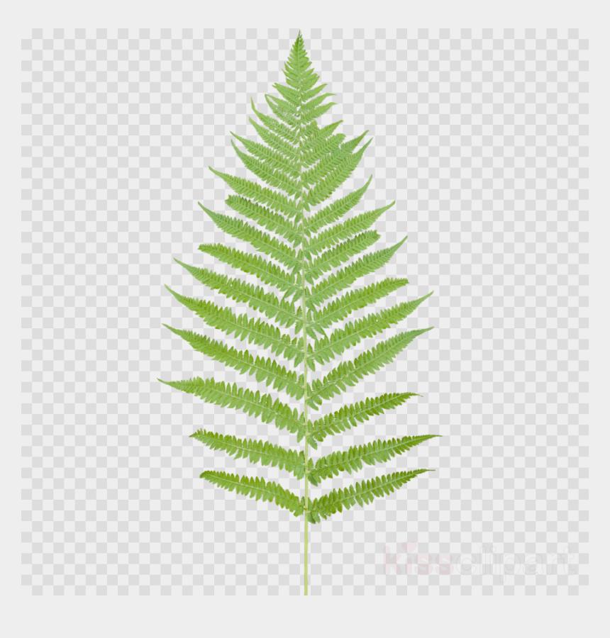 fern clipart, Cartoons - Tropical Ferns Leaf Png Clipart Fern Leaf Desktop Wallpaper - Transparent Background Lighting Bolt