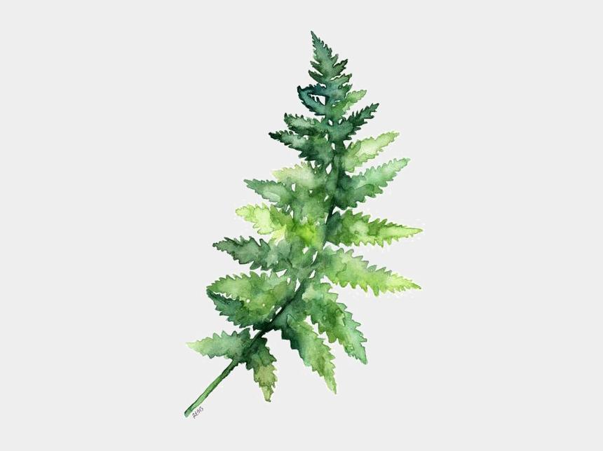 fern clipart, Cartoons - Leaves Fern Watercolor Printing Green Paper Painting - Green Watercolor Leaves Transparent