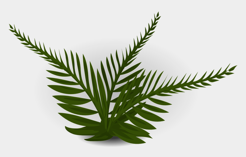 fern clipart, Cartoons - Forest, Fern Green Plant Nature Leaf Forest Garden - Prehistoric Tree Clip Art
