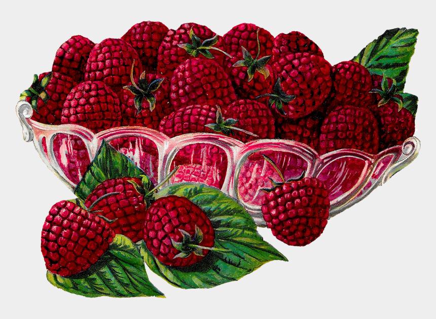 bowl of fruit clipart, Cartoons - Fruit Raspberry Berry Image Transfer Illustration Digital - Clipart Vintage Transparent Fruits