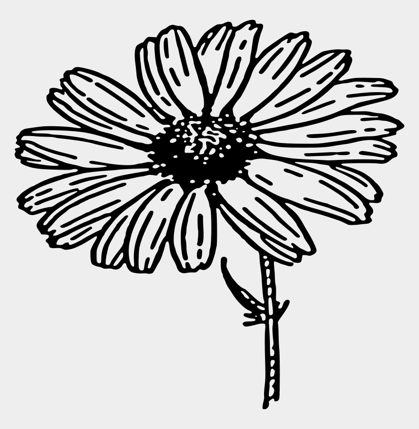 Daisy Flower Clipart - Clipart Kid | Flower outline, Get well soon, Flower  clipart