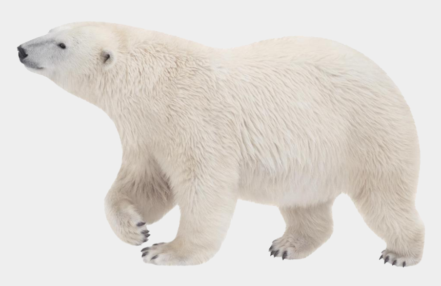 polar bear clip art, Cartoons - Download Polar Bear Png Transparent Images Transparent - Polar Bear Transparent Background