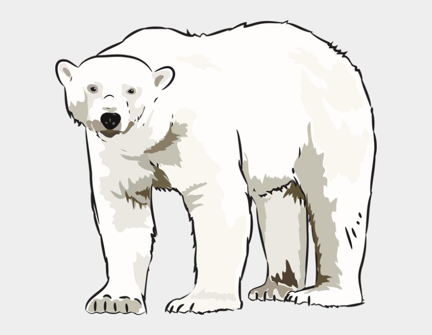 polar bear clip art, Cartoons - Art Polar Bear Clipart Kid - Polar Bear