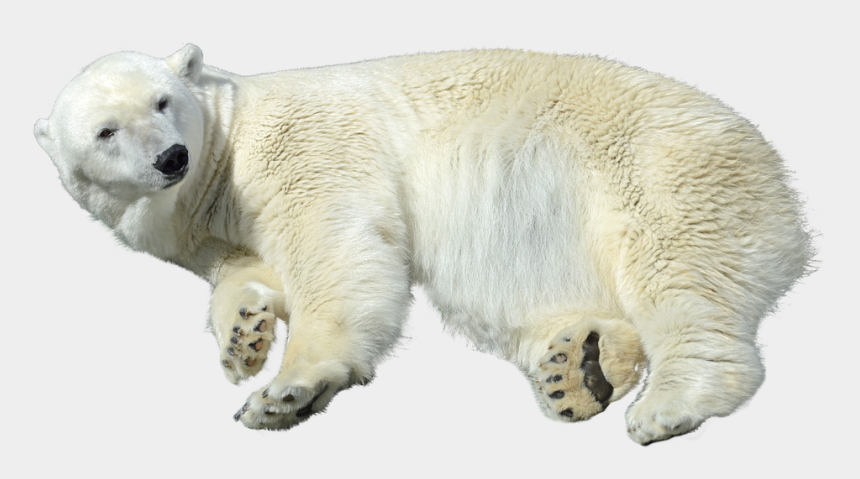 polar bear clip art, Cartoons - Download Polar Bear Png Transparent Images Transparent - Polar Bear