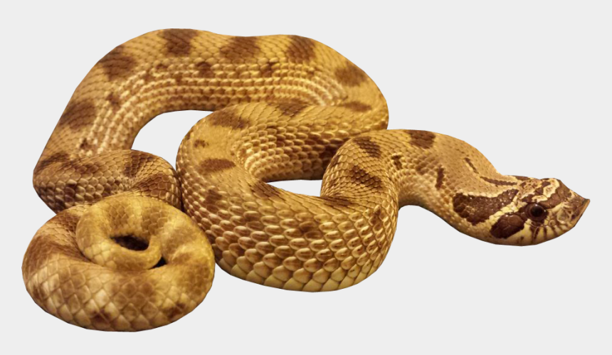 Anaconda Animal Snakes Png Transparent Images Clipart