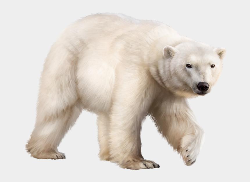 polar bear clip art, Cartoons - Ours Polaire Bear Clipart, Animal Wallpaper, Polar - Ours Blanc Png