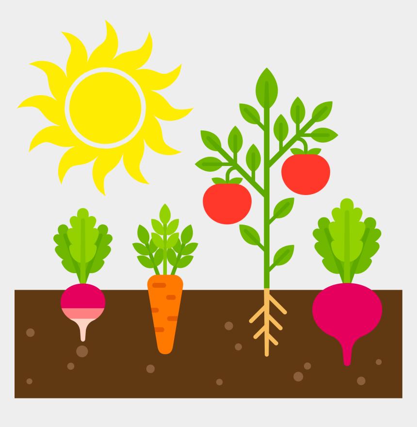 Vegetable Garden Clipart, Cliparts & Cartoons - Jing.fm