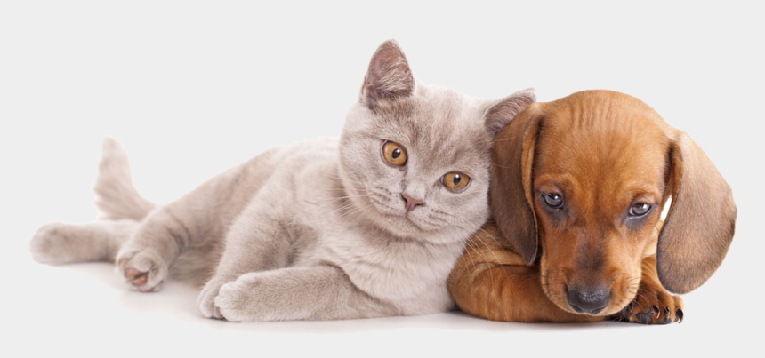 cats and dogs clipart, Cartoons - And Horse Sitting Pet Dog Together Cat Clipart - Cat And Dog Hd