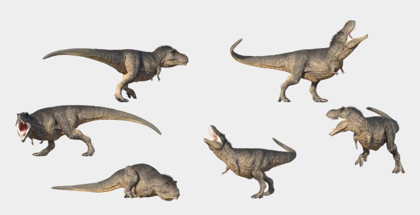 tyrannosaurus rex clipart, Cartoons - T Rex Png Transparent Image - T Rex Reference