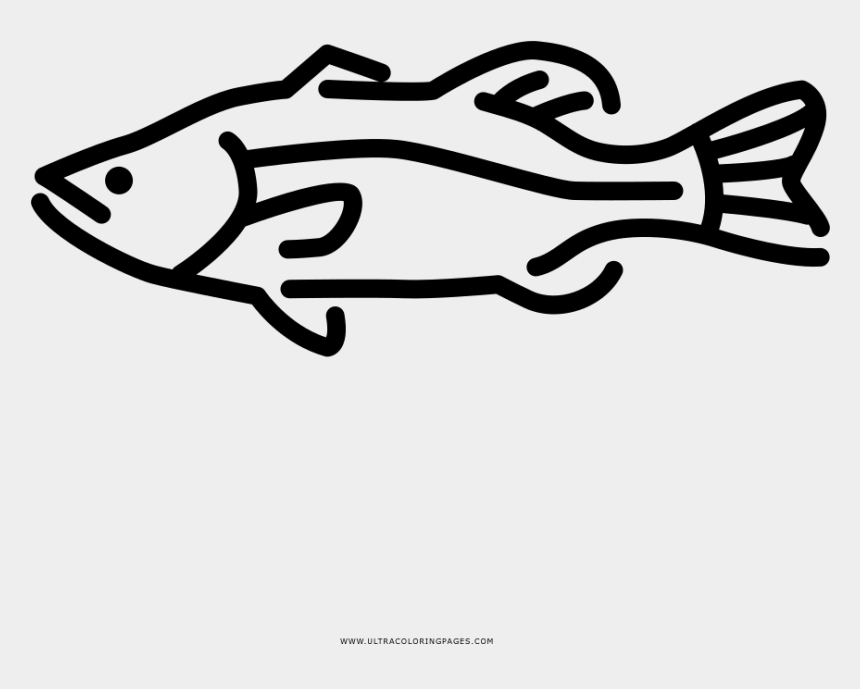 Largemouth Bass Coloring Page - Line Art, Cliparts & Cartoons - Jing.fm