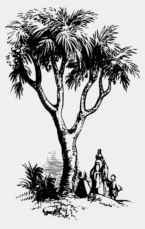asia clipart, Cartoons - Asia Drawing Coloring - Doum Palm Drawing