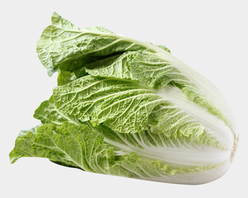 cabbage clipart, Cartoons - Cabbage Clipart Transparent Background - Chinese Cabbage Png