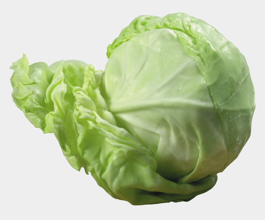 cabbage clipart, Cartoons - Clipart Vegetables Cabbage - Transparent Background Cabbage Transparent