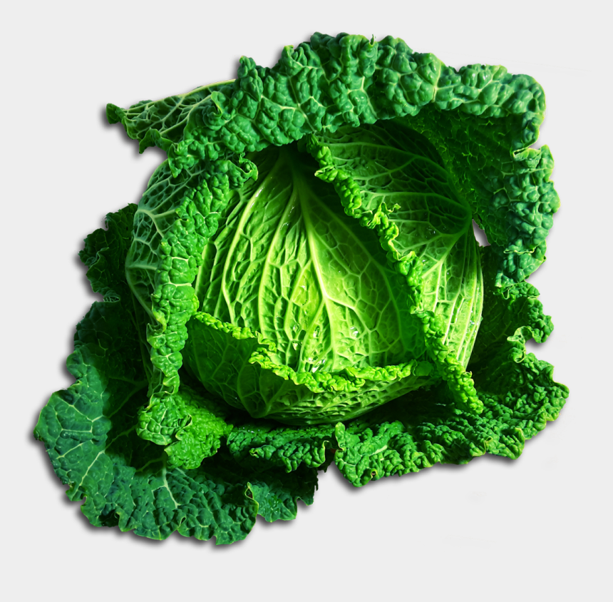 cabbage clipart, Cartoons - Green Cabbage Png - Clipart Transparent Cabbage