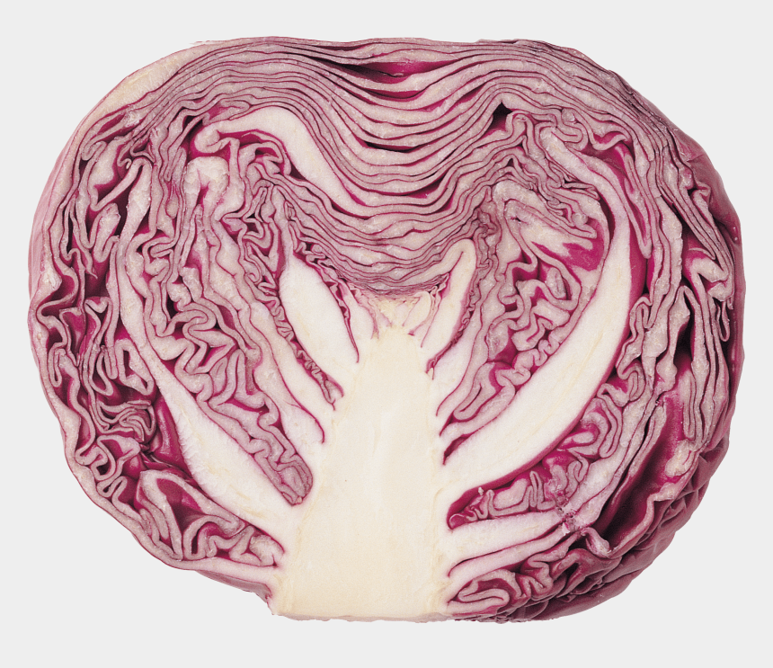 cabbage clipart, Cartoons - Cabbage Clipart Transparent Background - Transparent Red Cabbage Png