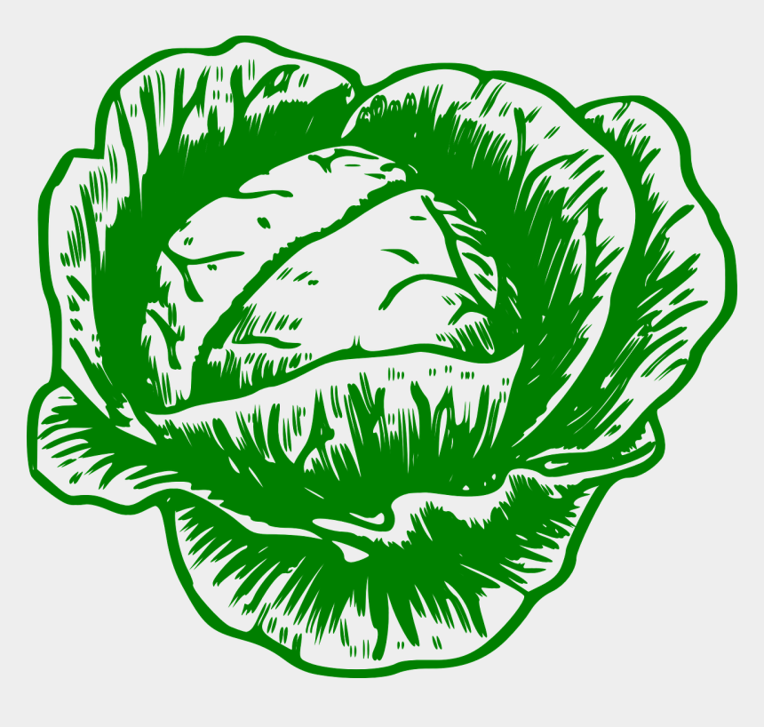 cabbage clipart, Cartoons - Cabbage Clipart Vector - Cabbage To Colour