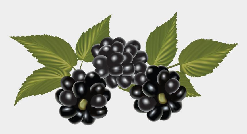 raspberries clipart, Cartoons - Blackberry, Clip Art, Blackberries, Pictures - Blackberry Png Fruit