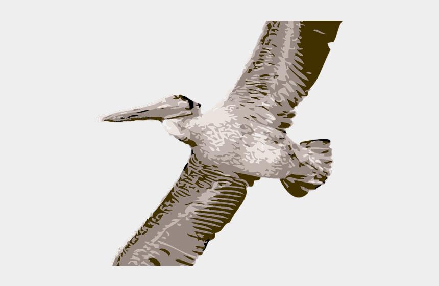 falcon head clipart, Cartoons - Peregrine Falcon Clipart Perican - Pelican Clipart