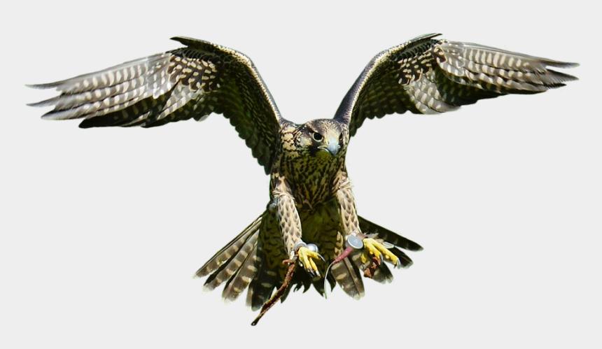 falcon head clipart, Cartoons - Falcon Png Transparent Images - Falcon Bird Png