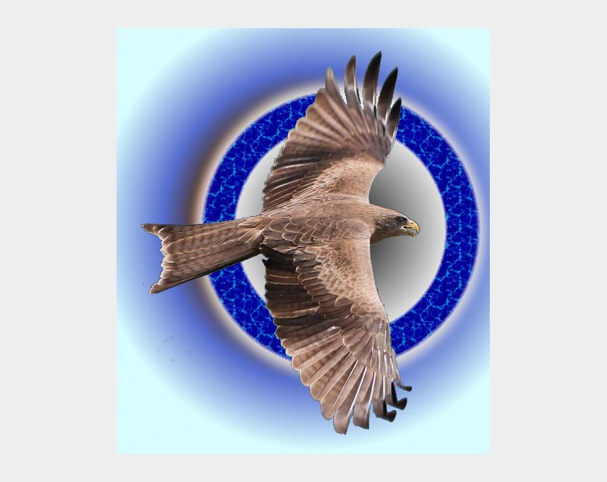 falcon head clipart, Cartoons - Peregrine Falcon Flys Free - Northern Harrier