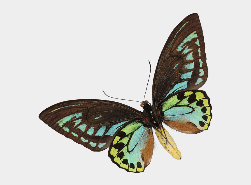 tadpoles clipart, Cartoons - In This Section, There's A Wealth Of Information About - Brush-footed Butterfly