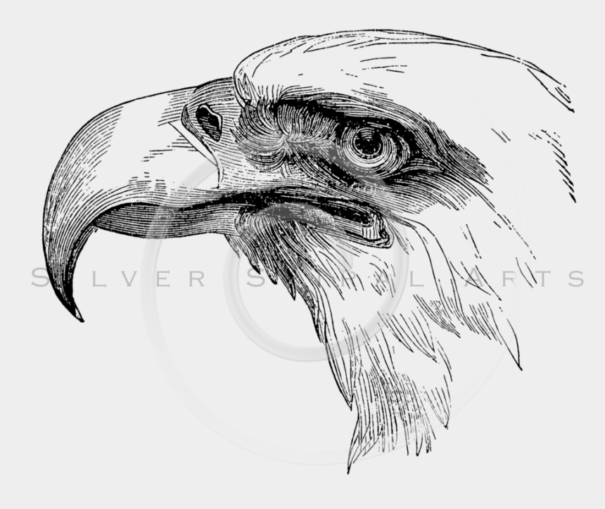 eagle head clipart black and white, Cartoons - Eagle Head Clipart Black And White