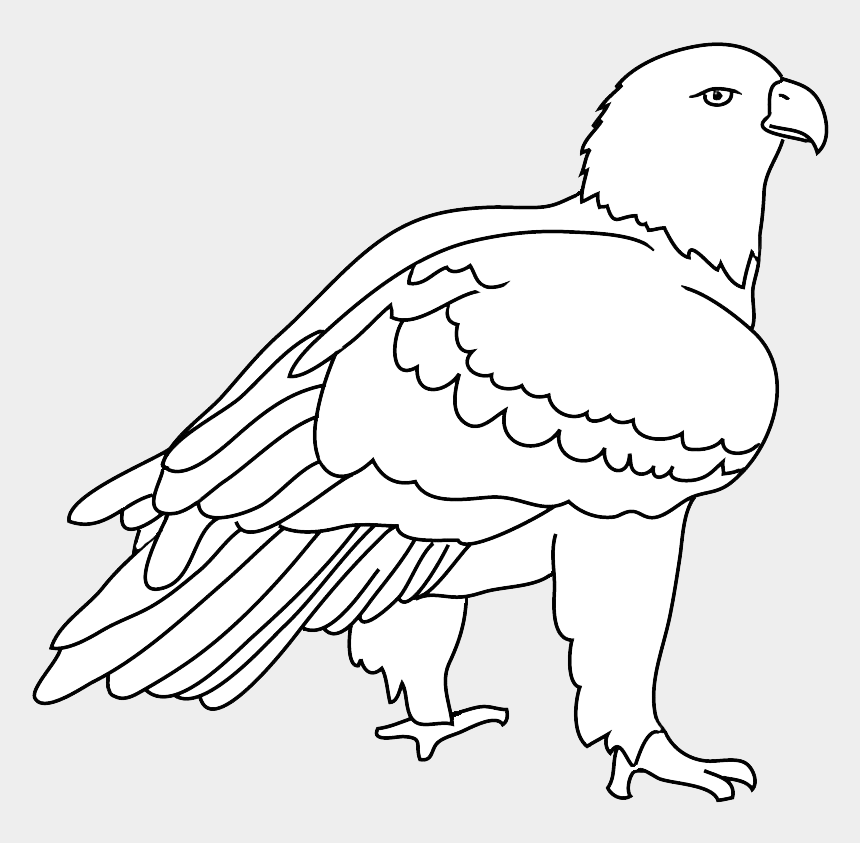 eagle head clipart black and white, Cartoons - Eagles Birds Png, Eagles Birds Png - Bald Eagle