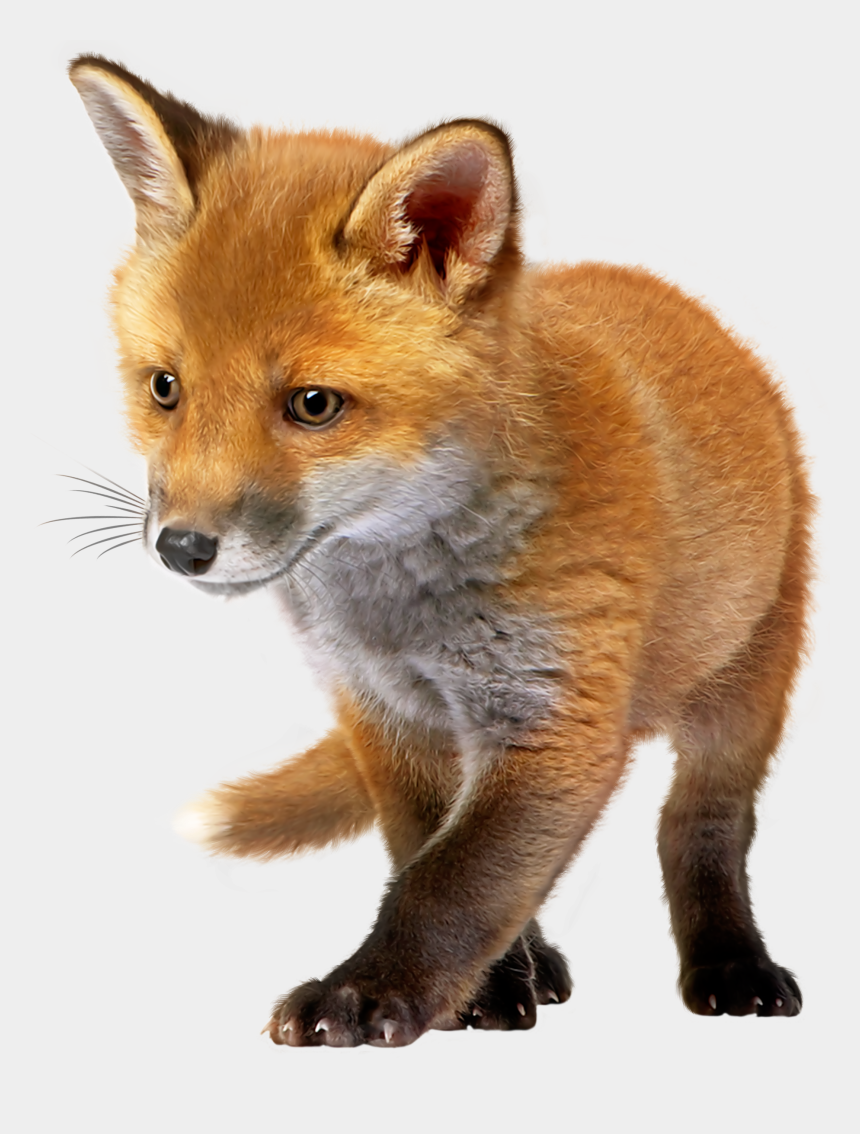 fox clip art, Cartoons - Baby Fox Png Clip Art - Baby Fox Png