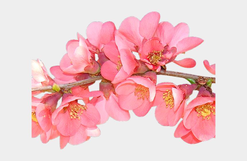 spring flowers clipart, Cartoons - Petal Clipart Spring Flower - Transparent Background Spring Flowers Clipart