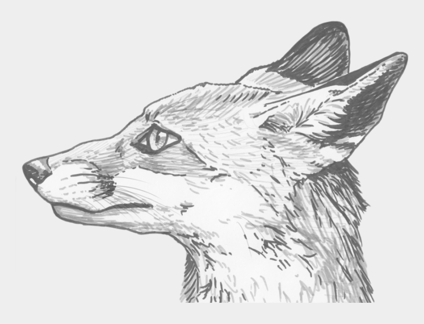 fox clip art, Cartoons - Download Fox Eyes Png Clipart For Designing Projects - Pencil Line Drawing Of Fox