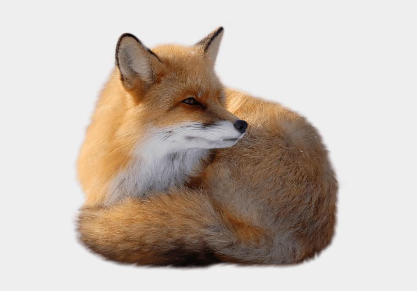 fox clip art, Cartoons - Fox Clipart Kit Fox - Red Fox Png