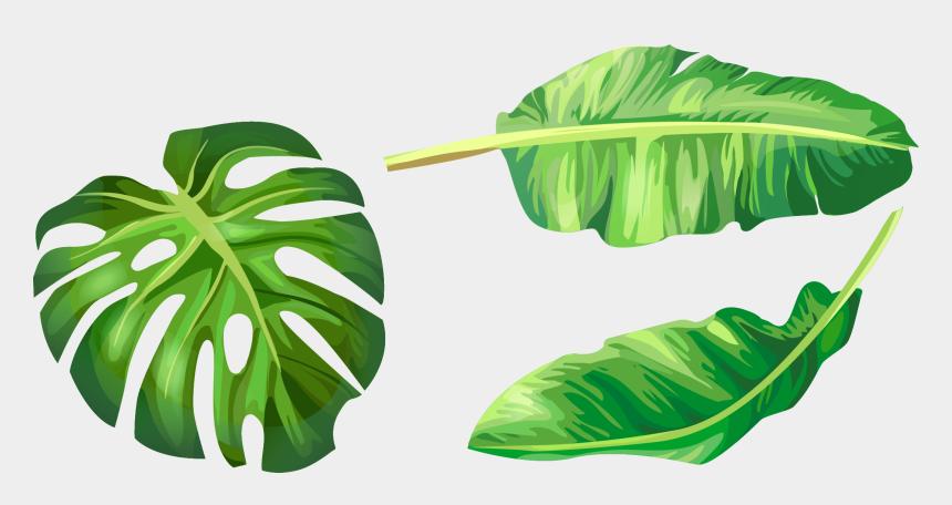 banana clip art, Cartoons - Leaf Leaves Illustration Euclidean Vector Green Banana - Banana Leaves Vector Png