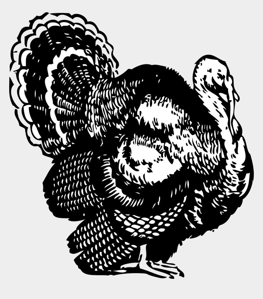 happy thanksgiving clipart, Cartoons - Turkey Black And White Turkey Clipart Black And White - Turkey Clipart Black And White