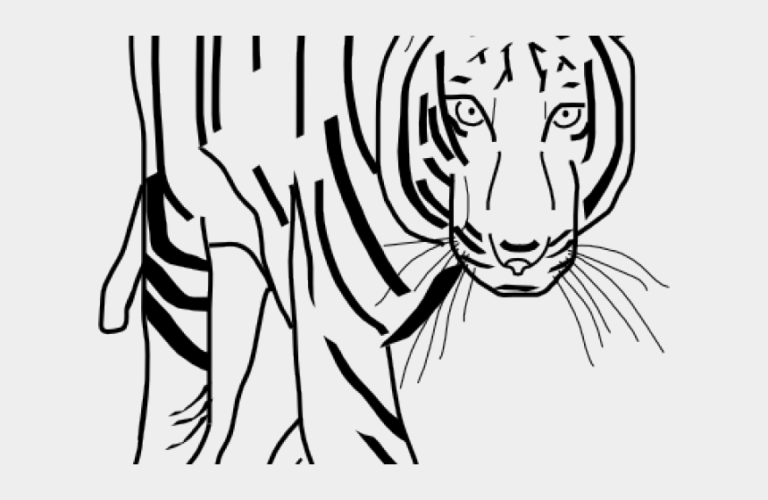white tiger clipart, Cartoons - Black And White Tiger Clipart - Tiger Clipart Black And White Png