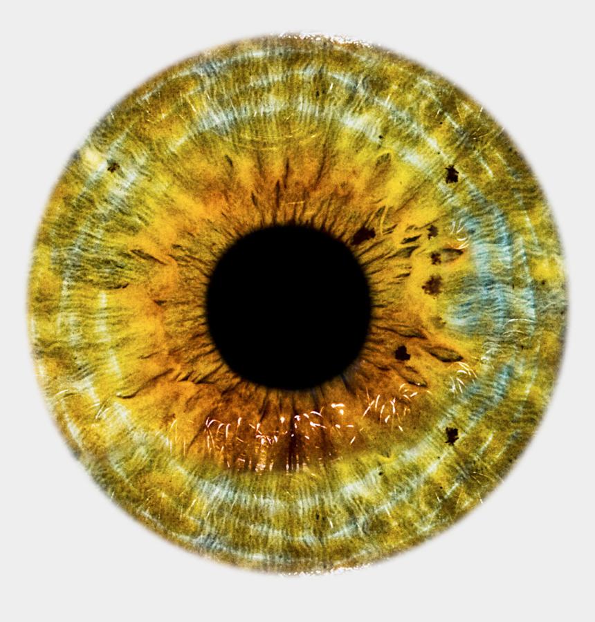 brown eye clipart, Cartoons - Iris Oeil, Eyes Clipart, Realistic Eye Drawing, Golden - Golden Eyes Png