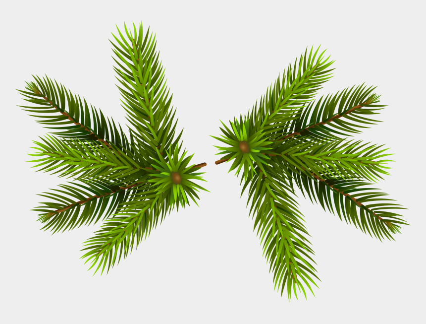 pine trees clipart, Cartoons - Pine Clipart Transparent - Pine Tree Branch Transparent