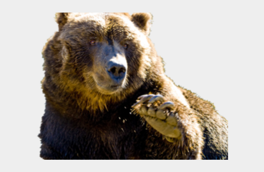 grizzly bears clipart, Cartoons - Grizzly Bear Clipart Canadian Bear - Grizzly Bear