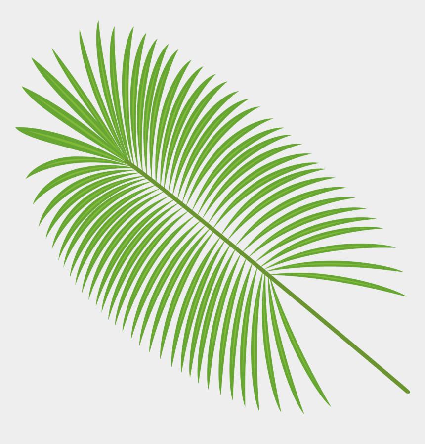 tropical leaf clipart, Cartoons - Botanical Vector Palm Leaf - Palm Leaf Vector Png