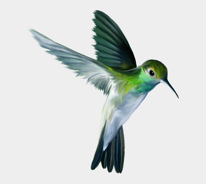 humming bird clipart, Cartoons - Clip Royalty Free Photo Zps Ef Png - Animals And Birds Png