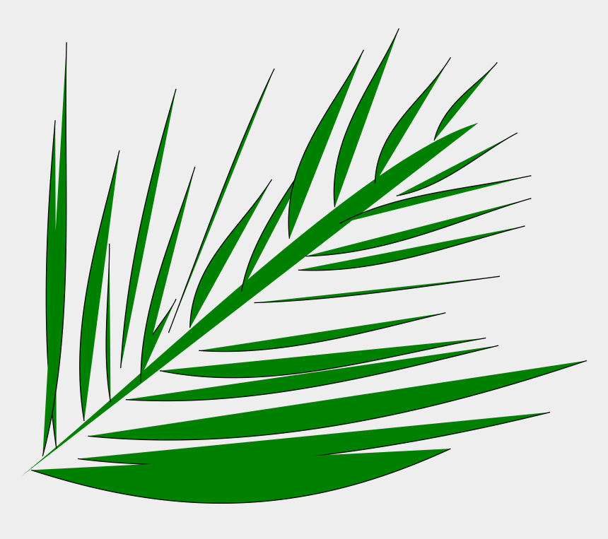 tropical leaf clipart, Cartoons - Palm-leaf Manuscript Palm Trees Computer Icons Palm - Palm Tree Branch Clip Art
