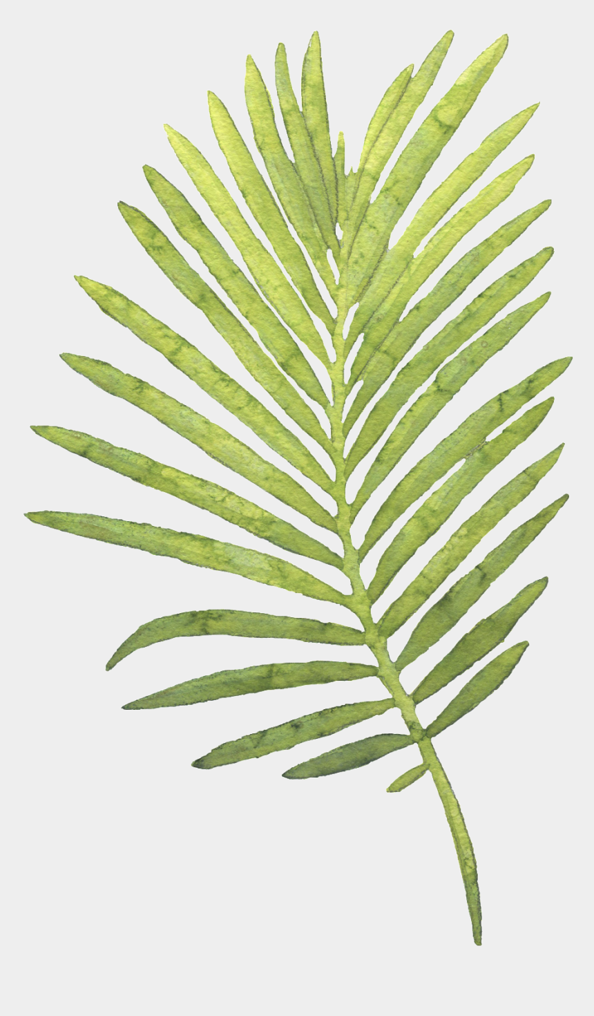 tropical leaf clipart, Cartoons - Watercolor Palm Leaves Png - Watercolour Palm Leaf No Background